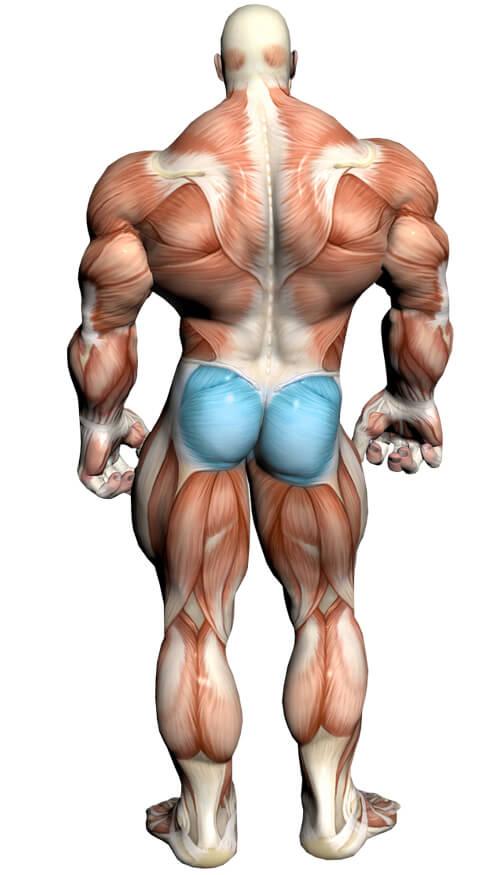 Diagrama de ejercicios de glúteos
