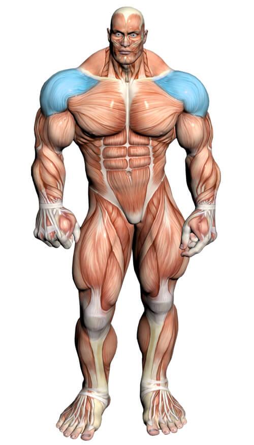 Diagrama de ejercicios de hombro