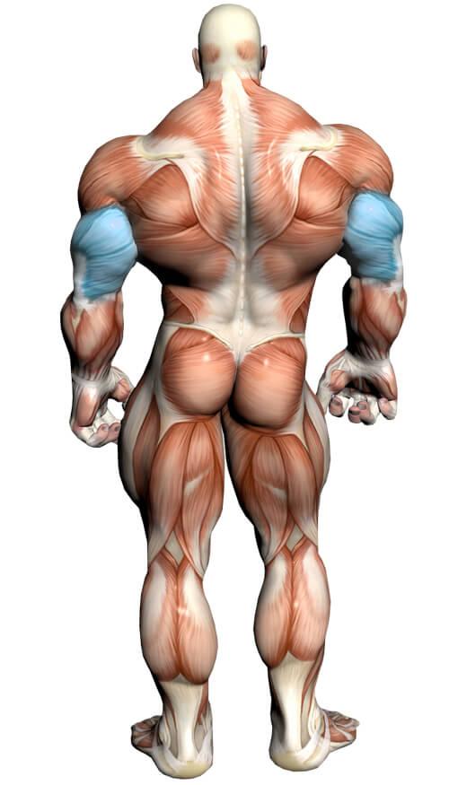 Diagrama de ejercicios de tríceps